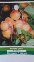 Moorpark Apricot 5 Gal Tree Healthy Fruit Trees Plant Sweet Juicy Apricots - $98.95