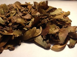 20 Seeds - Banisteriopsis Caapi Yellow (Yage) From Peru - $16.99