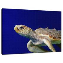 An item in the Art category: Animal / Wildlife Photograph Sea Turtle 2 Fine Art Canvas & Unframed Wall Art