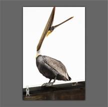 Pelican Photos for Coastal Decor, Nautical Wall Art, Beach House Gifts, ... - $30.00+