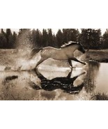 Running On Water by R. Dawson Palomino Horse Western Open Edition Paper ... - $37.62