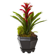 "16.5"" Bromeliad in Black Hexagon Planter - £35.05 GBP"