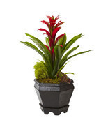 "16.5"" Bromeliad in Black Hexagon Planter - £36.23 GBP"