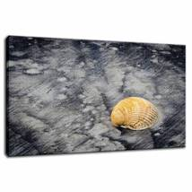 An item in the Art category: Black Sands and Seashell on the Shore Fine Art Canvas & Unframed Wall Art Prints