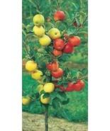 Apple Cocktail Fruit Tree Live Plant Hand Bud Grafted Gala, Fuji, Granny... - $39.99