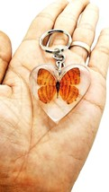 Butterfly in Clear Resin Real Brown Shape KeyRing insect Specimen Educat... - $9.74