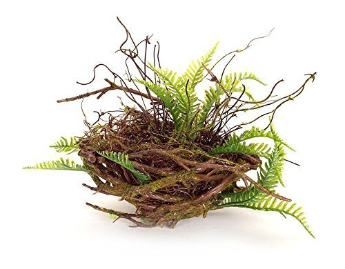 Spring Time Fern and Twig Decorative Nest