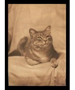 Cat Beautiful Portrait Photograph Sepia 5x7 Heavy Paper Kitty Cat Pet An... - $18.99