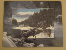 WOLF collector plate / plaque EDGE OF THE WILD Kevin Daniel WOLVES New F... - $18.39