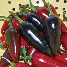 25 Seeds of Black Hungarian Pepper / Capsicum annuum - $13.86