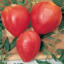 25 Seeds Oxheart Red Tomato - $18.81