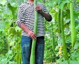 1 thumb155 crop