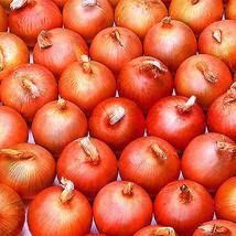 PREMIUM 300 Pcs Giant Onion Seeds Vegetable Seed Kitchen Food Seasoner P... - $4.49