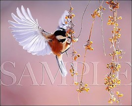 Bird Photograph 8X10 New Fine Art Color Print Picture Photo Nature Birds... - $7.95