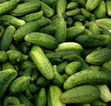 SHIP From US, 2000 Seeds 2 oz Boston Pickling Cucumber, DIY Vegetable Seeds ZJ - $55.80