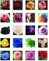 20 Kind Different Colors Of Flower  50pcs Seeds #GMS09  - $18.17