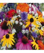 500 Pcs Seeds Wildflower Mixed Cutflower Annual Plant - RK - $16.00