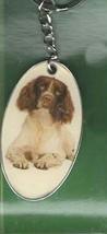 spaniel, english springer breed of dog ceramic encased in meta