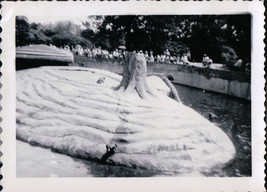 Vintage Tree Stump With Mound In Park Detroit MI Black & White Snapshot ... - $5.99