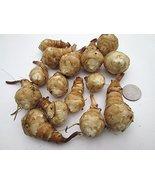 1 Pound/LB erusalem Artichokes Organic Sunchokes/Sunroot Tubers - $75.14