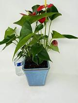 Elegant Red Anthurium Ceramic Pot -JMBamboo - $48.99