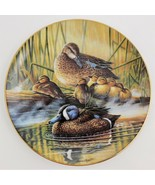 Bruce Langton Quiet Moment Blue Winged Teal Loving Look Duck Families 3 ... - $29.70