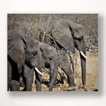 "28"" Stretched Canvas Elephants Print - Color Photo Print Close Up"