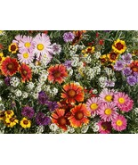Bird Butterfly n Bees Wildflower Mix Seeds. 560K seeds, or 2 lb - $141.98