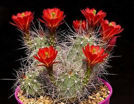 5 Seeds Mexican Claret Cup - $13.86