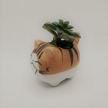 """Echeveria Succulents in Laughing Cat Planters, Live Plants in 2.5"""" Kitten Pots image 8"""