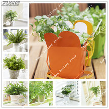 300Pcs Chinese Pure Green Fern Seed Fresh Purifying Air Supernatural Pro... - $2.16