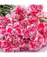 100pcs Bonsai Carnation seeds Beautiful Garden Flower seeds Easy Growing... - $8.95