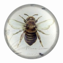Nature Under Glass Paperweights Bee Print - $15.65