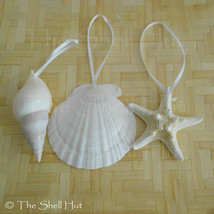 Seashell Christmas Ornaments LG Drilled Shell Natural Beach House Mermai... - $10.99