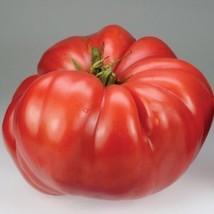 1/8 Oz Seeds of Church Tomato - $63.36