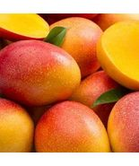 "SHIP FROM US Mango Haden Tropical Fruit Tree 12""-24"" TPE3 - $80.00"