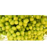 Cotton candy grape thumbtall