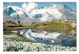 Switzerland Alps Wollgras See Piz Cambrena Bernina Pass Mountain Range P... - $4.99