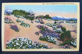 1940s Wild Flowers On The Desert California Curt Teich Linen Postcard - $4.46