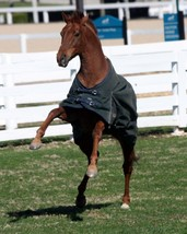 COLOR PHOTO - FUNNY CIDE    Playing in paddock - $8.00+