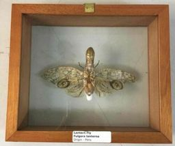 Insect Entomology Lot Collection 36pc Specimen Scorpion Lantern Fly Beetle image 3