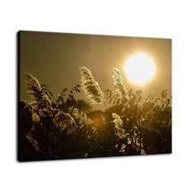 An item in the Art category: Golden Marsh Weeds Nature Fine Art Canvas & Unframed Wall Art Prints