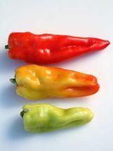 Giant Aconcagua Sweet Pepper Seeds 25 seeds - $11.65