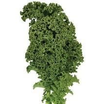 1M Seeds of Winterbor Kale - $50.79