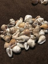 Cowrie Shell Beach Craft His And Hers Necklace Making Lot 3 Shell Variet... - $16.99
