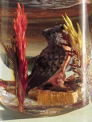 OWL in HABITAT ENCASED in Sloped ACRYLIC OVAL Made in Canada Vintage Lucite
