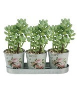 "3 Buckets 2.5"" Succulent Planter Metal Pots/ Silverware Flatware Caddy O... - $10.78"