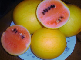 10pcs Golden Midget Small Watermelon Very Tasty Edible Fruits IMA1 - $13.99