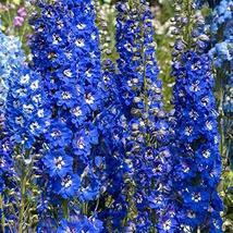 Delphinium Seeds Giant Blue Bird Flower Seeds (Perennial) 100 Seeds Garden Seeds - $31.68