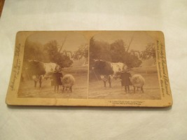A little Child shall lead them Sheep Bull Cattle Stereoview Card - $14.99